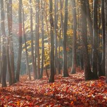 Chinese Medicine for Fall: Feel Your Best with Advice from the Experts